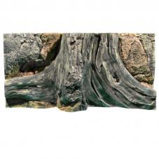 Amazonas 80 40cm